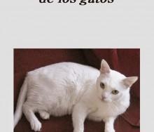 Lo que aprendemos de los gatos de Paloma Díaz-Mas